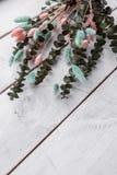 Decorative eucalyptus, color lagurus royalty free stock photography