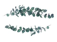 Decorative eucalyptus leaves wave arrangements. Isolated on white royalty free stock photo