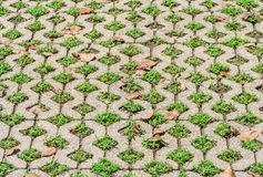 Decorative exterior floor Stock Images