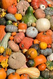 Decorative Fall Harvest Display Stock Photography