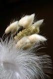 Decorative feather arrangement stock images
