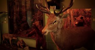 Decorative feature - stuffed deer head on red brick wall. Decorative feature - stuffed deer head 4k stock footage