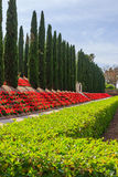 Decorative fence of green bushes, geraniums and rows of trees Royalty Free Stock Photography
