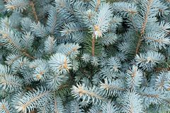 Decorative fir tree with silver branches Royalty Free Stock Photos