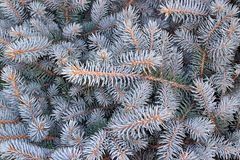 Decorative fir tree with silver branches Stock Photos