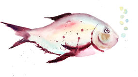 Decorative fish. Watercolor illustration of decorative fish Royalty Free Stock Image