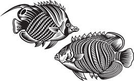 Decorative fish Stock Photos