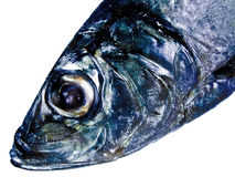 Decorative fish head. Isolated (oceans inside Royalty Free Stock Photography