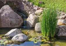 Decorative fish in pond Stock Images