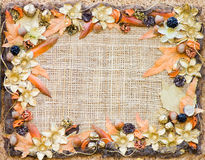 Decorative Floral Autumn Frame Stock Image