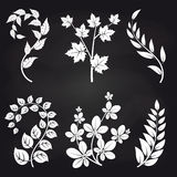 Decorative floral branches on blackboard. Background vector illustration Royalty Free Stock Image