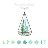 Decorative floral composition with succulents. Vector illustration with succulents in geometric vase,  on white Royalty Free Stock Images