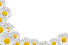 Decorative floral corner. With daisy on white background Stock Image