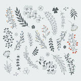 Decorative floral elements for design projects. Rustic branches and leaves hand drawn illustration Royalty Free Stock Images