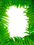 Decorative floral fern frame Stock Image
