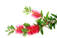 Decorative flower Stock Photos