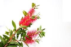 Decorative flower Stock Photo