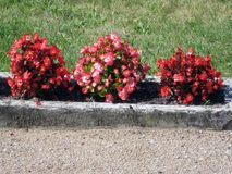 Decorative flower bed Stock Photography