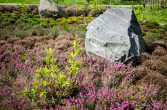Decorative flower bed in a garden with rocks and plants Stock Photo