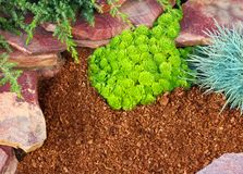 Decorative flower bed mulched with larch tree bark Stock Photos