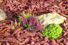 Decorative flower bed mulched with larch tree bark Royalty Free Stock Photos