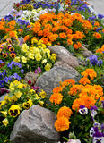 Decorative flower bed with stones Stock Photos