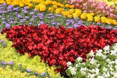 Decorative flower bed in a summer garden. Stock Photo