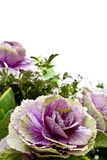 Decorative flower in a bouquet Royalty Free Stock Photos