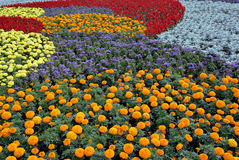 Decorative flower field Royalty Free Stock Photos