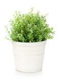 Decorative flower in flowerpot Royalty Free Stock Image