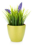 Decorative flower in flowerpot. Isolated on white background royalty free stock photography