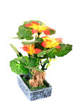 Decorative flower plant Stock Photography