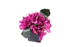 Decorative flower plant Royalty Free Stock Photos