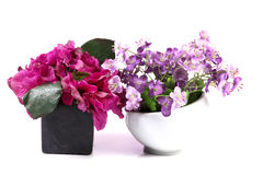 Decorative flower plants Royalty Free Stock Photography