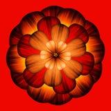 decorative flower red διανυσματική απεικόνιση