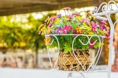 Decorative flower Royalty Free Stock Photos