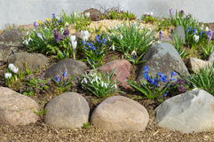 Decorative flowerbed with spring flowers Royalty Free Stock Image
