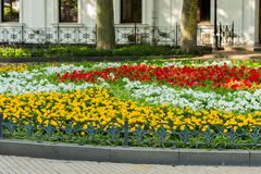 Decorative flowerbeds with flowers and bushes in landscape park. Decorative flowerbeds with flowers and bushes in the city`s landscape park stock photos