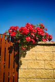 Decorative flowers. Red flowers on the stone wall with summer blue sky as background Stock Image