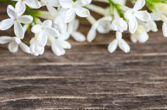 Decorative flowers background Royalty Free Stock Photo