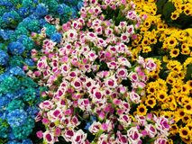 Decorative flowers - blue, yellow and pink Royalty Free Stock Photography