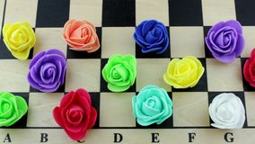 Color roses on a chessboard stock video