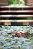 Decorative flowers floating in water. Decorative white, yellow and red petals floating in a large bowl of water, steps to a wooden bridge out of focus in Stock Image