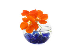 Decorative flowers in glass vase Royalty Free Stock Photography
