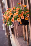 Decorative flowers house facade in colmar Stock Photography