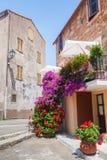 Decorative flowers. Narrow street, Corsica Royalty Free Stock Image
