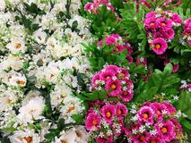 Decorative flowers pink and white Royalty Free Stock Image