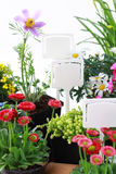 Decorative flowers ready for planting Stock Photography