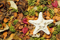 Decorative flowers with sea star Stock Image