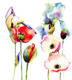 Decorative flowers. Watercolor illustration of decorative flowers Stock Photography